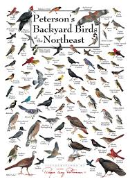 Backyard Duncraft Birds Posters com Peterson