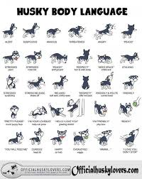 Dog Body Language This Is Good For All Dogs Not Just