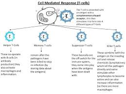 Image Result For Chart Of T Cell Types T Cell No Response