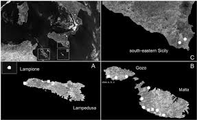 The Radiation Of Alopiine Clausiliids In The Sicilian Channel