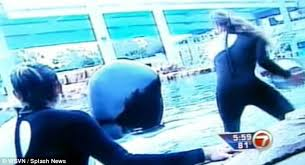 dawn brancheau attack footage. Beautiful Dawn Dawn Brancheau Was Filmed Feeding The Kiiller Whales Just Moments Before  She Attacked And Killed For Attack Footage T