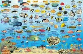 Fiji Map Reef Creatures Guide Franko Maps Laminated Fish