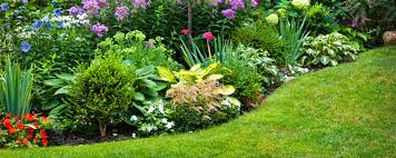 lush yard and planter .