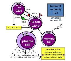 Humoral Immunity Flow Chart Immune Response Immune Cell Types Geeky Medics