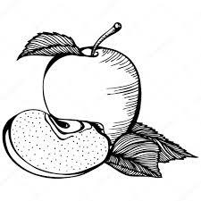 Disegno Bianco E Nero Di Apple Vettoriali Stock Ennona 96570638
