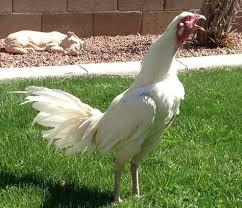 Jadi tunggu apalagi, segera bergabung bersama kami sekarang dan nikmati semua permainan oddigo dengan deposit terkecil. Sabung Ayam Online Ayam Senapan