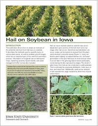 Soybean Hail Damage Chart Hail On Soybean In Iowa