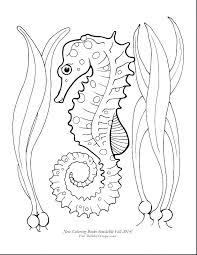 Top Rated Jellyfish Coloring Pages Pictures Seahorse Coloring Page