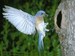 Top 20 Cute Birds HD Wallpapers For Pc ...