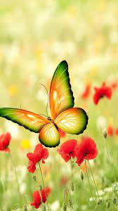 Butterfly iPhone Wallpapers (52 ...