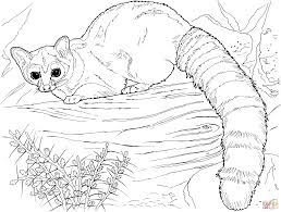 Small Picture Coloring Pages Animals Ringtail Cat Coloring Page Cat Coloring