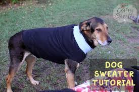 even my old man onyx an almost 9 yr old shepherd rotweiler loves his sweater