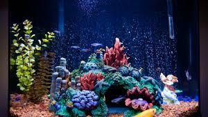 Saltwater Aquarium Lighting Guide Lighting For A Saltwater Aquarium