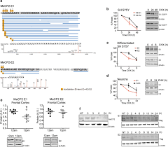 Mecp2 E1 Isoform Is A Dynamically Expressed Weakly Dna