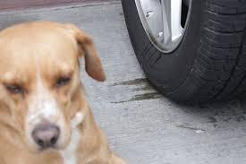 dog urine smell outside concrete