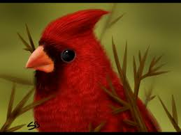 picture of red bird. Contemporary Red Red Bird Images  Photo4 With Picture Of Bird