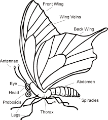 0763c890dbc6a5a1ddbb9ebccd96e123 science worksheet parts of a butterfly science pinterest on exploring science 3 worksheets