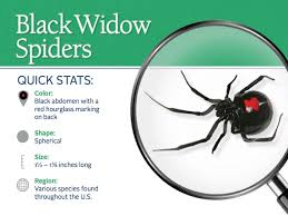 how to kill spiders in house. Snapshot Of The Appearance And Distribution Black Widow Spiders How To Kill In House P