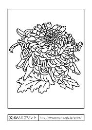 キク主線黒秋の花無料塗り絵イラストぬりえプリント Adult
