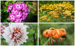 15 perennials that grow in zone 8