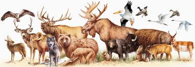 Horse Size Comparison Chart Rocky Mountain Mammal Size Comparisons Mary Donahue