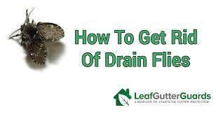 get rid of drain flies sewer flies