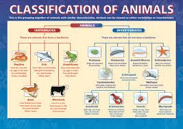 Animal Kingdom Taxonomy Chart Classification Of Animals Dicotomous Key Taxonomy Biology