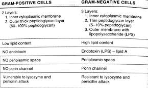 Bacterial Taxonomy 1 Classification Based On Morphology