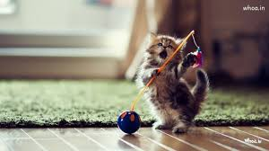 cute kittens playing wallpaper.  Playing Throughout Cute Kittens Playing Wallpaper C