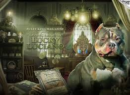 The Story Of Lucky Luciano The American Bully Board
