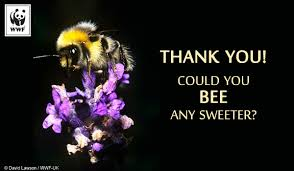 Free E Cards Thank You Send Free Ecards To Your Friends And Family World Wildlife