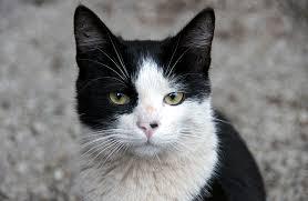 black and white kittens. Modren Kittens Black And White Cat Names Intended And White Kittens I