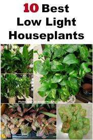 10 best low light houseplants