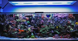 how a reef tank really looks under hybrid t5 led lighting