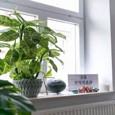 Fensterbank Deko Modern Pixie Landcom