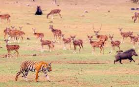 Water Scarcity Forces Wild Animals To Stray Out Of Habitats The Hindu