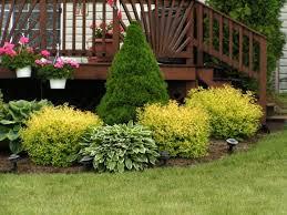 spirea in garden design