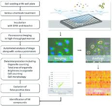 Systematic Flow Chart And Phenotype Based High Throughput Screening