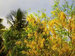 kanikonna the vishu special flower
