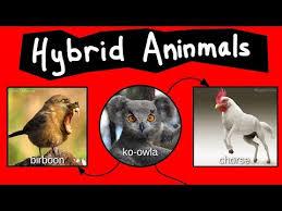 Internet Names For Bizarre Hybrid Aninmals