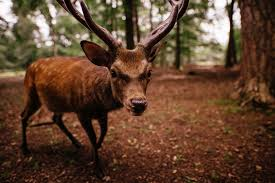 how to keep deer away from the garden 6 tips to have one of the best deer repellent gardens dealing with deer