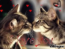sweet cat love. Wonderful Cat For Sweet Cat Love Blingeecom