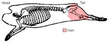 Ham Selection Preparation The Virtual Weber Bullet