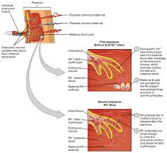 Universal Recipients Blood Designation Blood Typing Anatomy And Physiology