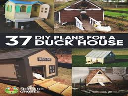 duck house plans instructions unique like how to build a duck house plans new 272 best