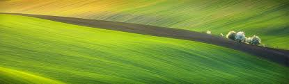 grass field background. Awesome-green-yellow-grass-field-aerial-background-header Grass Field Background L