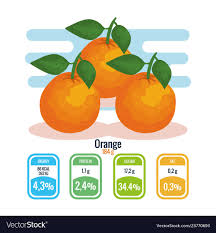 fresh oranges with nutrition facts vector image