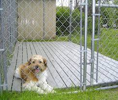 outdoor dog kennel flooring options designs