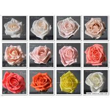 Calla Lily Color Chart Rose Calla Lily Buttonhole Corsage Real Touch Calla