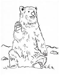 Small Picture Grizzly Bear Coloring Page Samantha Bell
